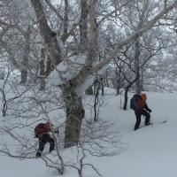 富良野岳 冬尾根BCスキー