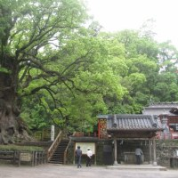 龍門滝と大楠