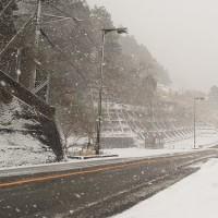 雪でした~