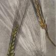 楽書き雑記「小さくても遊び心が詰まった版画=定年から20年余、松原義秋さん初の銅版画個展」