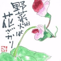野菜畑は 花ざかり