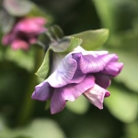 2/14 今日の花たち・つぼみが顔を出しています