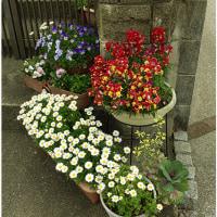 家々の花々