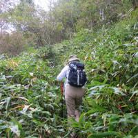 12 盛太ヶ岳(891m:島根県吉賀町)登山  ササに覆われた登山路を