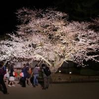 「東北でよかった」弘前の夜桜