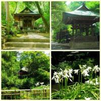 新緑の深大寺から調布を巡る散歩