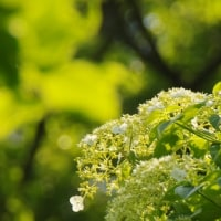 神戸市立森林植物園 3