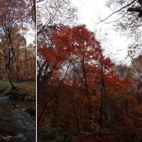 16年10月24日 桃胴滝・兎滝赤水和渓谷周回コース 2人行