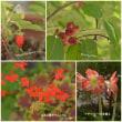 5月の赤い色~庭
