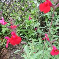 小さな花達。