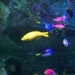 サンシャイン水族館、不思議の国のさかなたち。