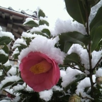 ❄初めての粉雪❄─‥✨