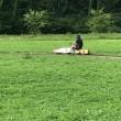 2017/07/17 5インチゲージ 「コマッち」試運転