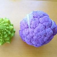 終盤を迎えた菜園の冬野菜!