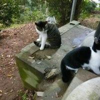 実は伏見稲荷は猫スポットだった There were many cats in Fushimi Inari