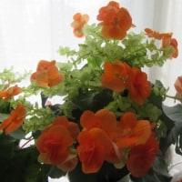 ⁂お天気良く晴れて・・お花が綺麗に咲いてます~~