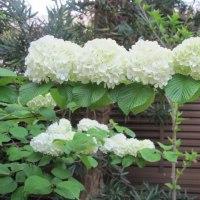 白い花たち①
