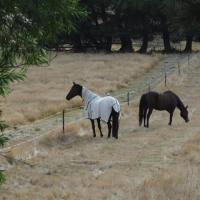 オーストラリアのハンギングロック競馬場