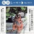 沖縄県シーサー探訪 ☆ 私のシーサー