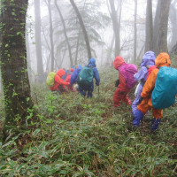 ⑥ 東郷山(ブログ未発表の名峰) : 四本杉