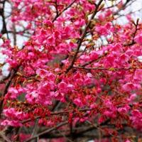 確かな春の足音