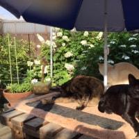お庭のパラソルの下でくつろぐ猫ちゃんたち