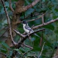 帰路・今日もヤマグワの木に寄り道をする-2