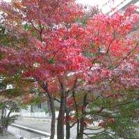 ヒルトン小田原の紅葉とプール