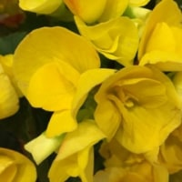 今日のお花        Today's flower