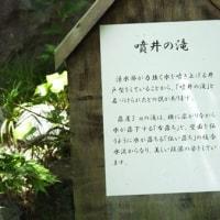 まもなく夏が来ます 葉山しおさい公園:神奈川県葉山町