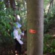 上野の森 戸籍調査始まりました