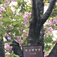 久しぶりにお昼のコンサート in 京王堀之内