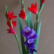 わたしの育てている花たち