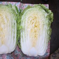 初収穫のキャベツと白菜