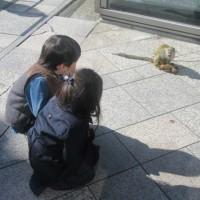 原宿駅前のコブシがもう花盛り