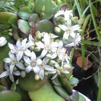 少し花が大きいような・・・・