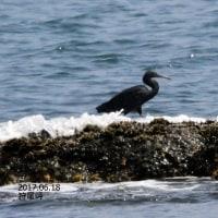 6/25探鳥記録写真-2(6月中旬に出会った鳥たち)