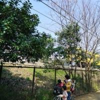 陽射しが眩くなった武蔵関公園 その2