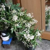 玄関の花達..