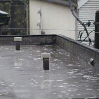 今朝(3月21日)の東京のお天気:雨、(3月の作品:花を持つ少女)