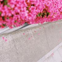 pink passage