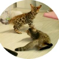 かわいい猫ちゃんたち
