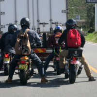 写真・なぜか、かわいいミニバイク集団