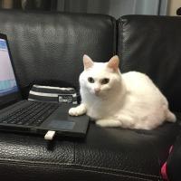 6月13日(火)のつぶやき ボクは肉球(pad)で、タッチパッド(touchpad)派ニャ(ФωФ)/ #白猫 #cat #pad #touchpad