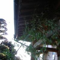 竹で掃除???