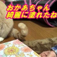 コロリアージュするお母ちゃんを見つめる♂猫だいず