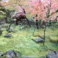 名古屋八勝館にて時雨る茶会の紅葉狩