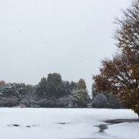 11月の観測史上初の積雪。