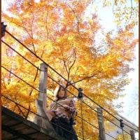 近所の吊り橋に行って来ました