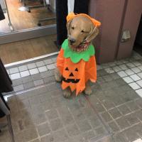 オサンポ walk - ハロウィン・ドッグ a Halloween Dog